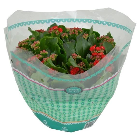 Dekozentrale der onlineshop f r floristenbedarf Dekozentrale