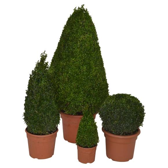 Fantastisch Pflanzen Für Das Freiland